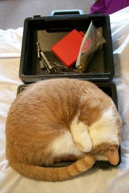 Punkin Sleeping In A Toolbox