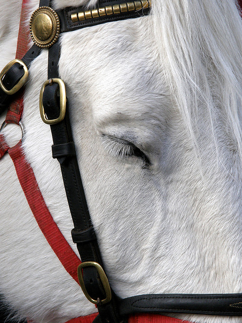 Sleep: A cream horse shuts its eyes as horses and ponies are sold