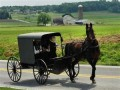 Amish Recipes and Home Remedies