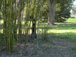 You'll find bamboo everywhere!