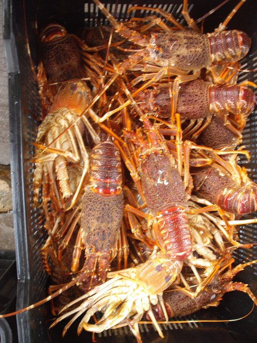 Crayfish in a crate
