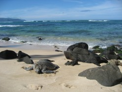 Best Camping on Hawaii Beaches