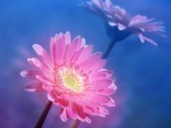 LIKE THE FLOWERS YOU GAVE