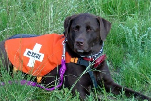 American Search & Rescue dogs are on their way to help in Japan