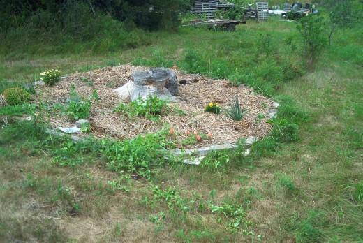 Creating a circular organic garden day 1