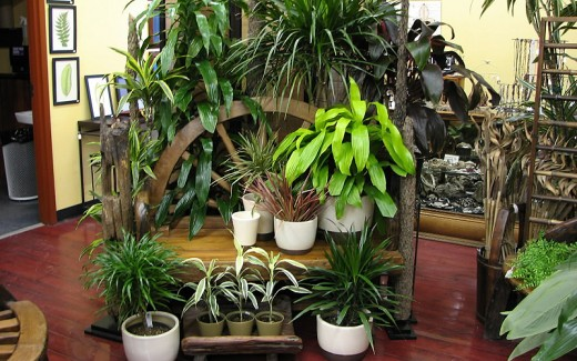 house plants and  indoor gardening