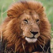 Maembe profile image