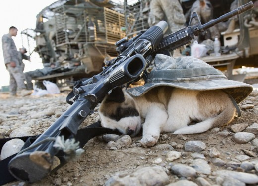 A puppy sleeps under a U.S soldier's hat and rifles in Baquba, in Diyala province some 65 km (40 miles) northeast of Baghdad November 6, 2008