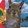 TheGroundsquirrel profile image