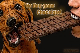 No Chocolate for your Dog!