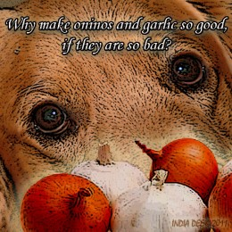 Don't feed your dog onions or garlic!
