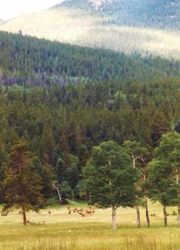 Notice the herd of elk in the meadow.