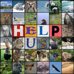 Animals and Animal Rights