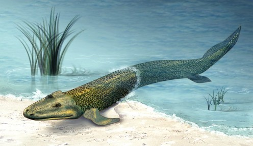Reconstruction of Tiktaalik by Zina Deretsky, National Science Foundation (Courtesy: National Science Foundation). See: http://en.wikipedia.org/wiki/File:Tiktaalik_roseae_life_restor.jpg