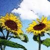 Sunflower222 profile image