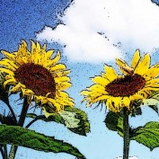 Sunflower222 profile image
