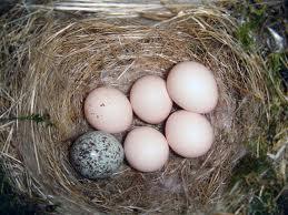 Notice the Odd (Cuckoo) Egg