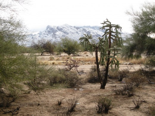 Desert vegetation with Catalina Mountains in background