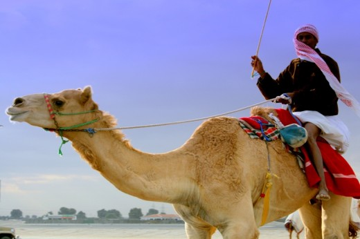 Camel with Trainer.