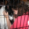Dog Rescue: How Does it Work?