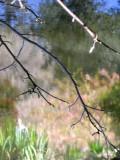 Haiku: Awakening Spring