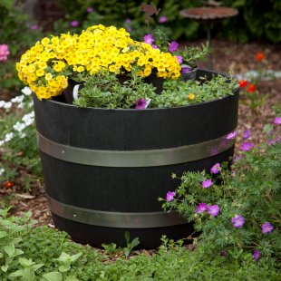A whiskey barrel, like the one shown in this photo, makes a great springtime gardening project. There are a variety of attractive annuals and perennials that can be added to it a garden barrel.