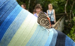 A Diaethria Butterfly landed on me
