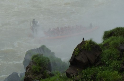 A Vulture watching a boat in the mist at the base of Iguazu Falls. I wonder what he is thinking!
