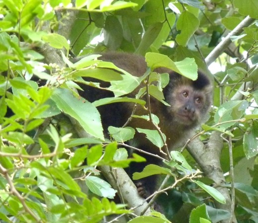 A monkey in a tree was watching us