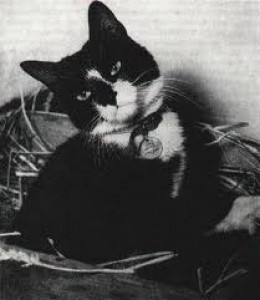 Simon. The cat that saved a ship.