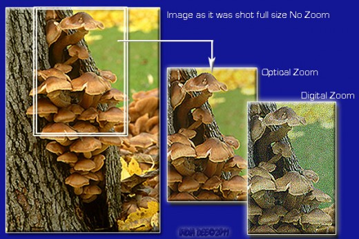 Zoom differences are simulated using image editing software and are designed as only an example of the intense differences between types of zooms for beginners. copyright IndiaDee 2011