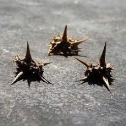 What is the best way to get rid of goat heads in your yard? aka Vinca-vine.