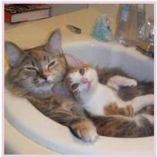 """""""THIS SINK IS FOR LOVER'S ONLY!"""""""