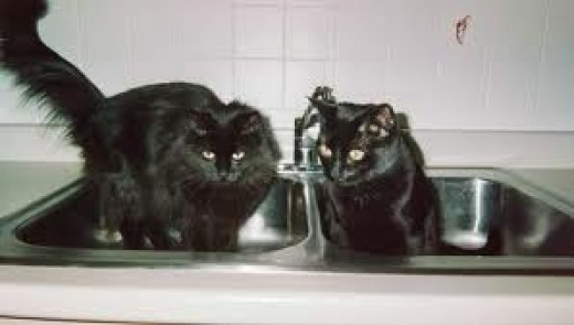 """WE BELIEVE IN HIS AND HER SINKS.  THAT'S WHAT KEEPS THE ZING IN OUR RELATIONSHIP!"""
