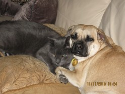 7 Easy Tips for Cats and Dogs Living Together Peacefully