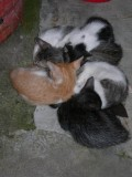 Peaches, Carmencita, Simforoso, Charlie, Chuckie in a tight huddle