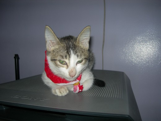 Carmencita was wondering if she should have opted for a scarf instead of a ribbon.