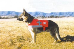 Dogology - Service Dogs - Helping the World in a Special Way