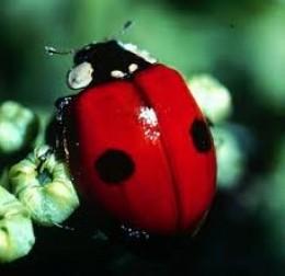 I'm glad I'm a little red bug