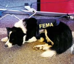 Sheridan     April, 1994 -  January, 2004    Background: Disaster search dog deployed on numerous missions including hurricanes, Pentagon terrorist act (2001), LaPlata, MD F-4 tornado (2002)