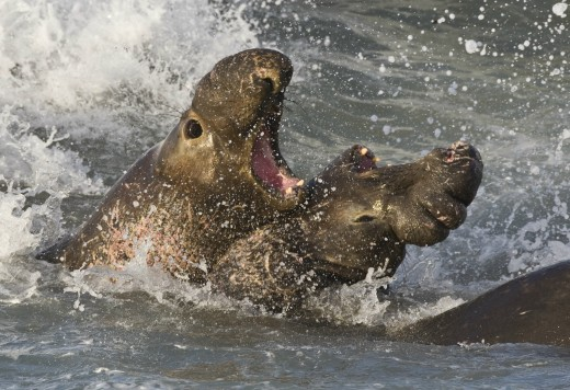If you smell like an elephant seal... your buddy might end the relationship FOR you!