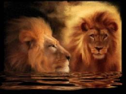 ...Lion Blossom...