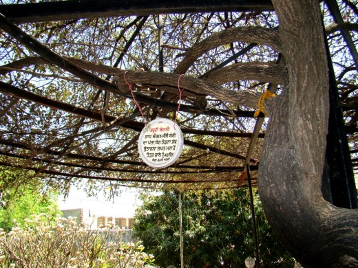 The BER tree planted by Shri Guru Nanakji at the site where a Gurudwara stands today (Gurudwara Nanak Sarai Sahib)