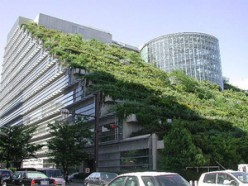 What are Green Roofs