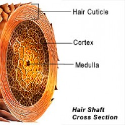 Split ends and causes of hair breakage