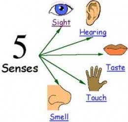 ALL FIVE SENSES ARE WONDERFUL!