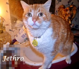 Jethro-He came too close to being PTS as no one wanted him. Shelter name Twist