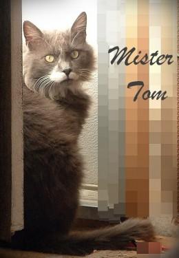 Mister Tom (shelter name Chapman)