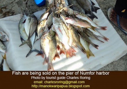 Numfor waters are abundant of fish