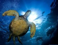 Protecting Sea Turtles and Marine Life Preservation - Ocean Animals